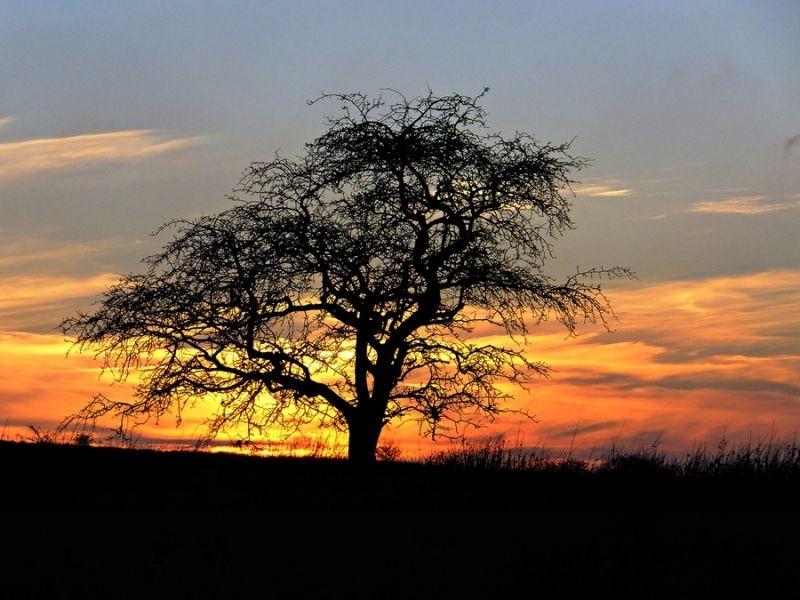 Evening on the Serengeti