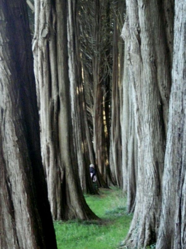 A cloister of Trees