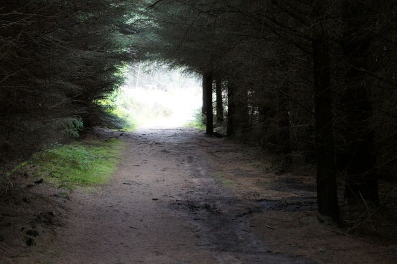 Passage_through_the_trees_Longridge_Fell