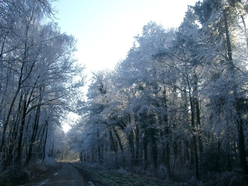 Frosted trees, Hesepe Germany