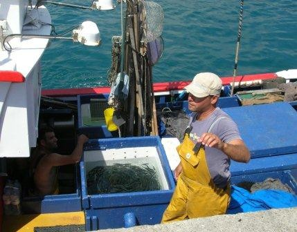 Anchovies -they don't get any fresher than this...