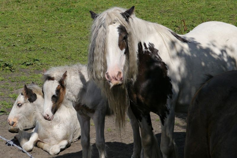 Horses with funny hair.