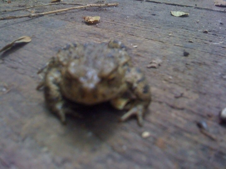 Small frog / toad