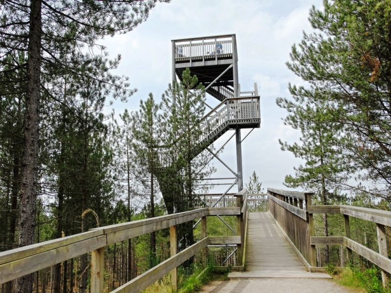 Observation Tower in middle of forest