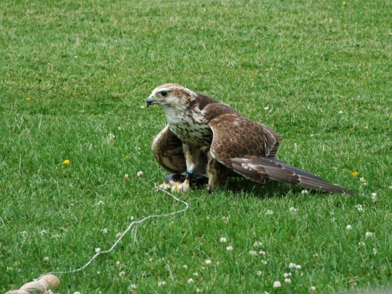 Birds of prey centre,, Settle.