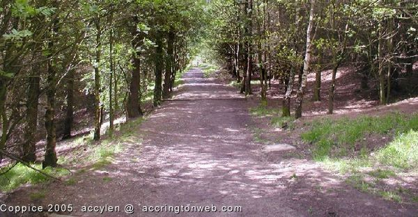 The Coppice: May-2005